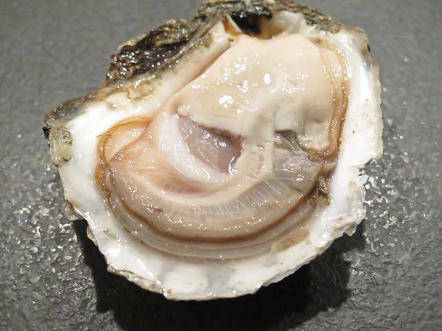 An oyster.