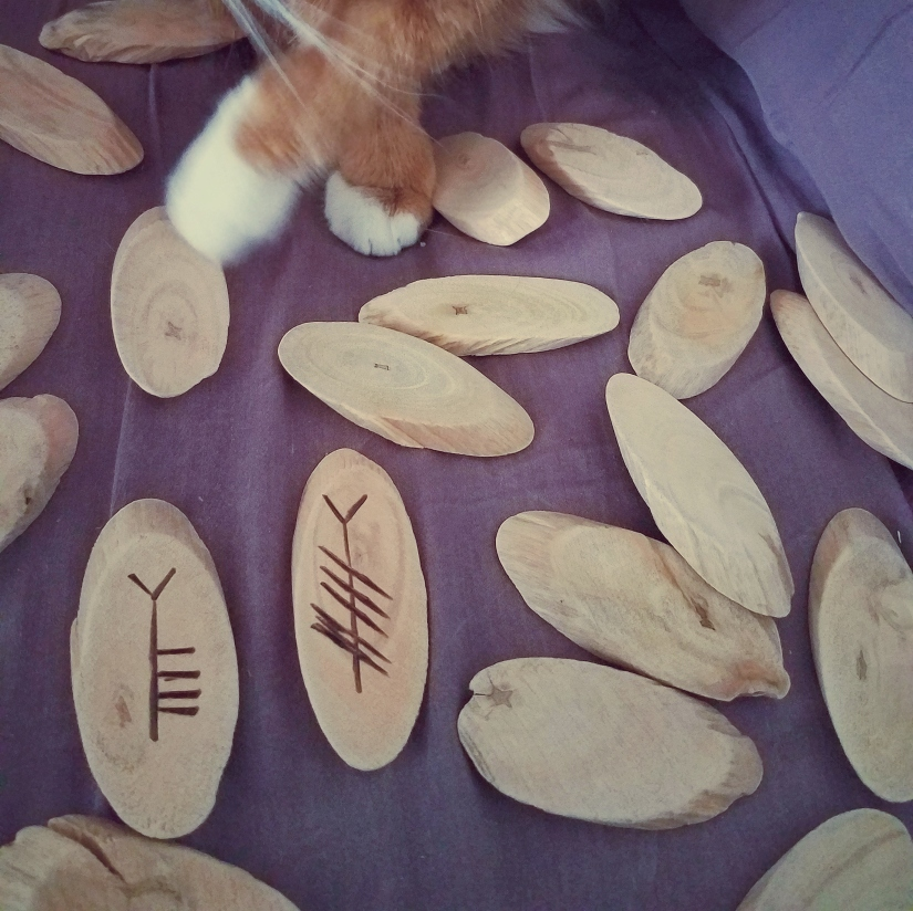 An orange cat paws at a set of driftwood Ogham staves,
