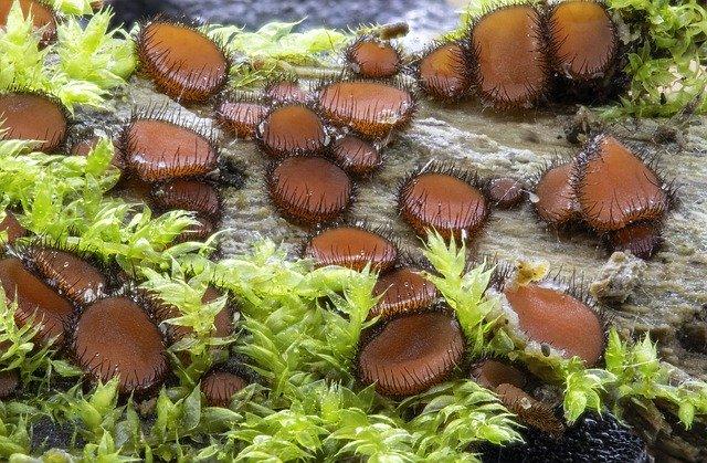 eyelash-fungi-4593804_640