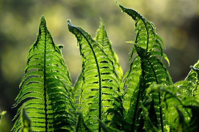 Fern fronds in sunlight.